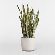 Живые комнатные растения