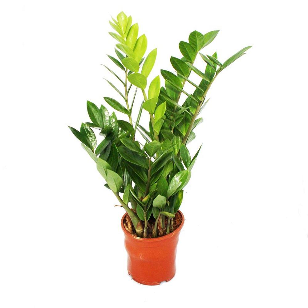 9 фактов, которые необходимо учесть перед приобретением вертикального озеленения живыми растениями
